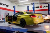 F83 BMW M4 Evolution Racewerks Chargepipes Injen Intake 6 190x127 ModBargains BMW M4 F83 mit Injen Kit & mehr Power!